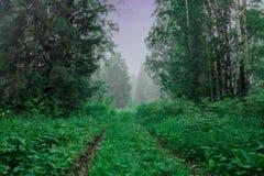 Molnig morgon för sommar, en bana till skogen, dimmiga träd Royaltyfria Bilder