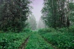 Molnig morgon för sommar, en bana till skogen som är dimmig Royaltyfri Bild