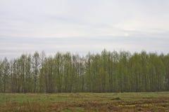 Molnig morgon för träd Fotografering för Bildbyråer