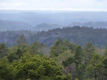 molnig skog över skysikt Arkivfoton