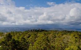molnig skog över skysikt Arkivbilder