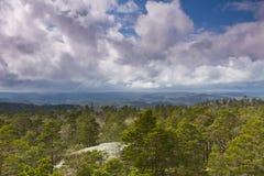 molnig skog över skysikt Arkivbild