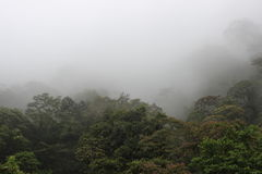 molnig skog Royaltyfria Bilder