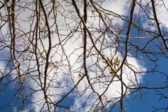 molnig skytree Arkivfoton