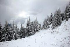 Molnig wheather över sörjer trädskogen i vintertid Royaltyfria Bilder