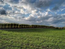 Molniga gräs Royaltyfri Foto