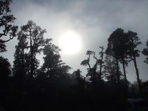 Molniga skymning- och trädkonturer på västkusten av Nya Zeeland royaltyfri fotografi