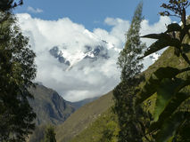 Molnigt berg som inramas av växter Arkivfoton