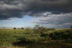 molnigt fält 2 Royaltyfria Bilder