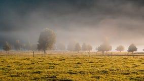 Molnigt fält i morgonen Fotografering för Bildbyråer