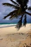 Molnigt havsogräs för fradga i Mexiko Royaltyfri Bild