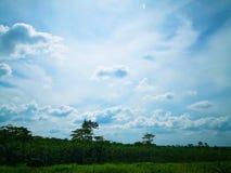 Molnigt ovannämnt olje- för blå himmel gömma i handflatan kolonin i den soliga dagen royaltyfria bilder