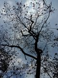 Molnigt träd Royaltyfria Foton