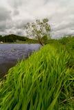 Molnigt väder Det finns ett träd i bakgrunden vid sjön I det stora gräset för förgrund arkivbild