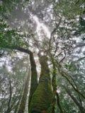 Molnskog, Doi Inthanon nationalpark, Chiang Mai royaltyfri bild