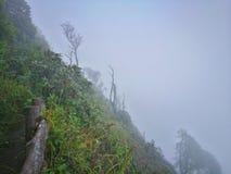 Molnskog, Doi Inthanon nationalpark, Chiang Mai royaltyfri fotografi