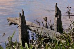 Molo dal fiume Fotografie Stock Libere da Diritti