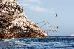 Molo dla guana wysyła, w Islas Ballestas, Paracas półwysep, zdjęcie stock