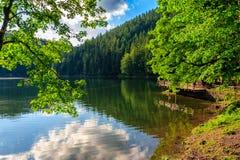Molo na halnym jeziorze w lesie Fotografia Royalty Free