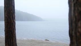 Molo przy jeziorem, lasowym jeziornym brzeg deszczem i śniegiem, Lustrzana powierzchnia jezioro las zakrywa z pierwszy Obraz Stock