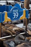 Molo 39 w San Fransisco Fotografia Royalty Free