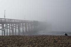 Molo Znika w mgłę z seagull Fotografia Stock
