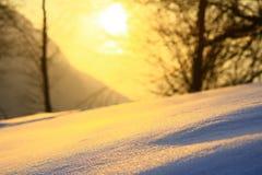 moloda halna słońca Ukraine widok zima Fotografia Royalty Free