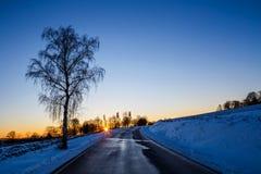 moloda halna słońca Ukraine widok zima Zdjęcia Stock