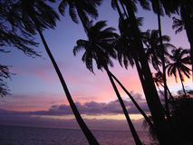 Molokai Sunset. Sunset at Molokai Coconut Grove,  Molokai, Hawaii Royalty Free Stock Photography