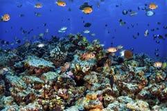 Molokini Reef Royalty Free Stock Photos