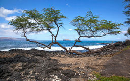 Molokini between the Trees Royalty Free Stock Photos