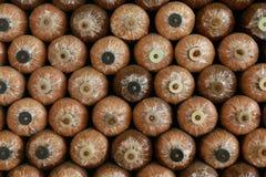 Molta bottiglia del fungo alla casa del fungo Fotografia Stock