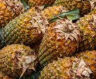 Molta frutta dell'ananas Immagini Stock