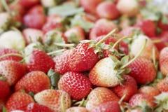 Molta frutta fresca della fragola Fotografie Stock