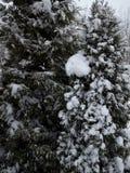 Molta neve su questi alberi Fotografie Stock