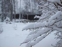 Molta neve su questi alberi Immagini Stock