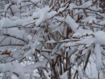 Molta neve su questi alberi Immagine Stock