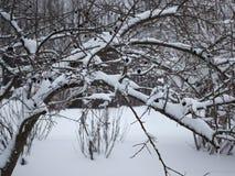 Molta neve su questi alberi Fotografia Stock Libera da Diritti