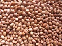 Molte arachidi crude asciutte marroni immagini stock