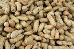 Molte arachidi nelle coperture. Immagini Stock