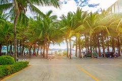 Molte belle alte palme si sviluppano vicino, palme di aleya, isola tropicale ed i bei alberi diventano il cielo l'asia Fotografia Stock
