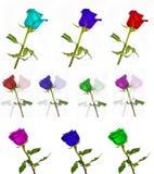 Molte belle rose senza fondo, rose dei fiori isolate in grandi numeri Immagini Stock