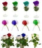 Molte belle rose senza fondo, rose dei fiori isolate in grandi numeri Fotografie Stock Libere da Diritti