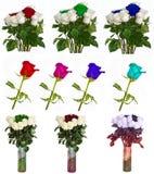 Molte belle rose senza fondo, rose dei fiori isolate in grandi numeri Immagini Stock Libere da Diritti