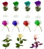 Molte belle rose senza fondo, rose dei fiori isolate in grandi numeri Immagine Stock