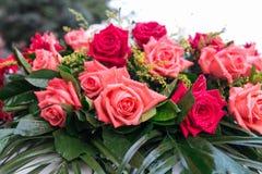 Molte belle rose sono sulle foglie verdi Immagini Stock Libere da Diritti