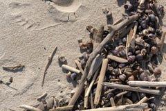 Molte conchiglie sul fondo del primo piano della sabbia immagini stock libere da diritti