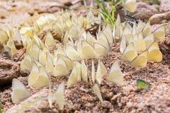 Molte farfalle bianche sono sulla sabbia immagini stock