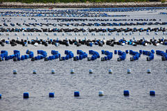 Molte file dei pontoni che galleggiano sul mare Fotografie Stock