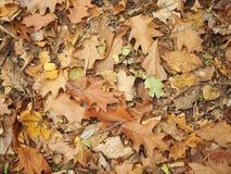 Molte foglie asciutte dagli alberi differenti nella grande prossimità immagini stock libere da diritti